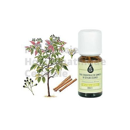 Cannelle de Ceylan écorce, huile essentielle bio LCA Cinnamomum zeylanicum