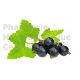 Cassis Ribes nigrum - extrait de plante fraîche standardisé en solution buvable