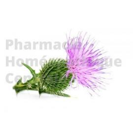 Le chardon marie est une plante médicinale utilisée dans le traitement de divers troubles hépatiques et biliaires.