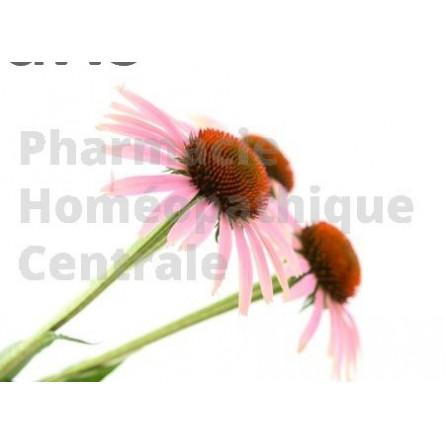 ECHINACEE EPS - Phytothérapie PhytoPrevent  pour stimuler l'immunité et protéger l'organisme des infections respiratoires.