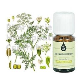 Carvi est une huile essentielle bio qui a des propriétés digestives et mucolytiques et qui aide la digestion et favorise le tran