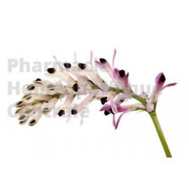 Le fumeterre est réputée pour ses vertus dépuratives et son effet bénéfique en dermatologie.