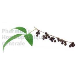 Gattilier Plante très utile en gynécologie, pour la régulation endocrinienne, les règles douloureuses et les troubles menstruels