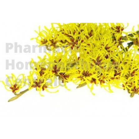 L'hamamelis est utilisée pour traiter les affections veineuses (varices, hémorroïdes, congestions veineuses...).