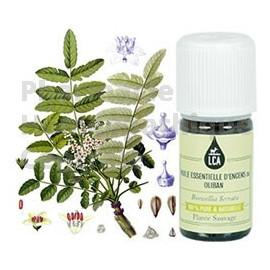 Encens ou oliban en huile essentielle bio immuno-stimulante