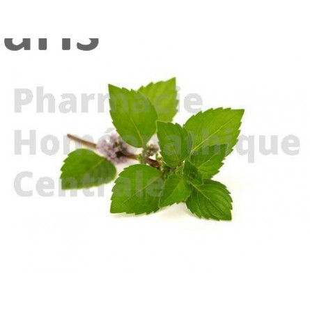 La menthe poivrée Mentha piperata stimule les sécrétions du foie, de l'estomac et des suc digestifs.