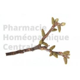 Le macérât de bourgeons de Noyer est employé pour rééquilibrer la flore intestinale
