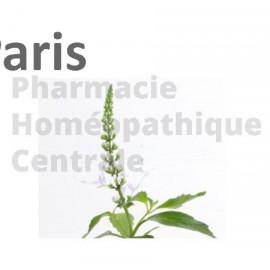 Orthosiphon stamineus L'orthosiphon a un pouvoir diurétique, et est une aide précieuse dans une cure d'amincissement.
