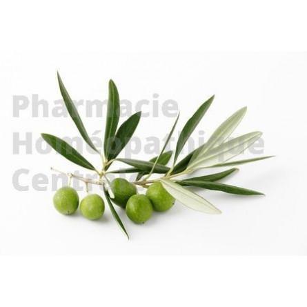 L'olivier a des vertus antihypertensives. il régule la tension artérielle. Extrait de plante fraîche standardisé