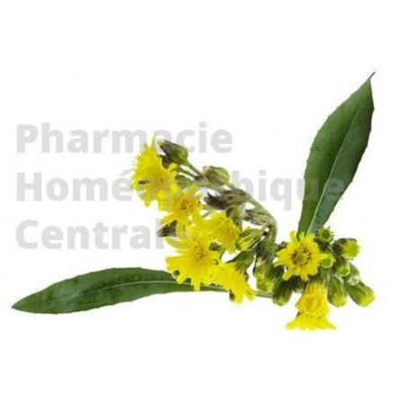 La piloselle est une plante pour le drainage et l'élimination urinaire.  Extrait de plante fraîche standardisé