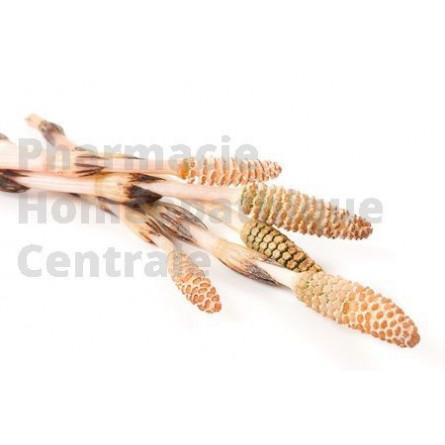 Prêle EPS, Equisetum arvense facilite la reconstitution du cartilage et a également une action diurétique