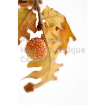 Le macérât de bourgeons de Chêne :  stimulant des glandes endocrines et  stimulant sexu