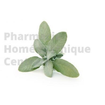 SAUGE OFFICINALE Salvia officinalis pour bouffées de chaleur et les sueurs liées à la ménopause.