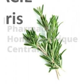 Romarin   bourgeons - pur ou dilution 1 DH ( au choix)