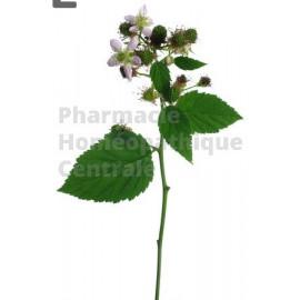 Ronce  bourgeons - pur ou dilution 1 DH ( au choix)