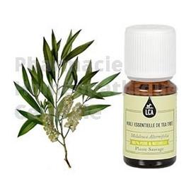 TEA TREE - Arbre à thé huile essentielle Melaleuca alternifolia