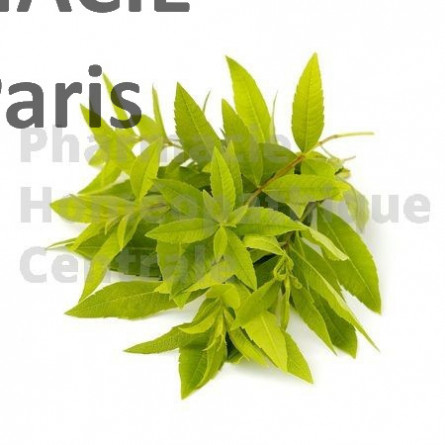 VERVEINE ODORANTE - Verbana officinalis - vertus calmantes