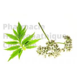 VALERIANE EPS - Phytothérapie PhytoPrevent