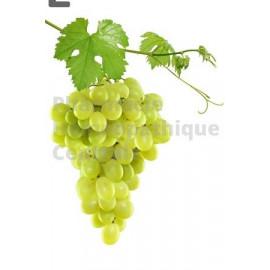 Vigne rouge - Bourgeons macérât bio