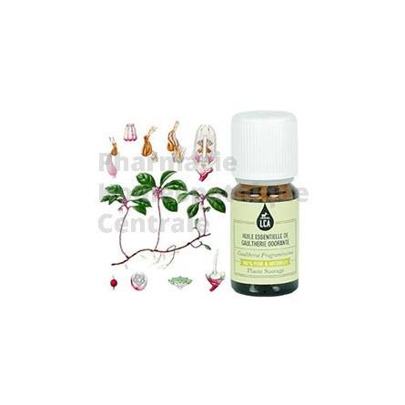 Gaultherie - Wintergreen  l'Huile essentielle des douleurs musculaires, osseuses et articulations