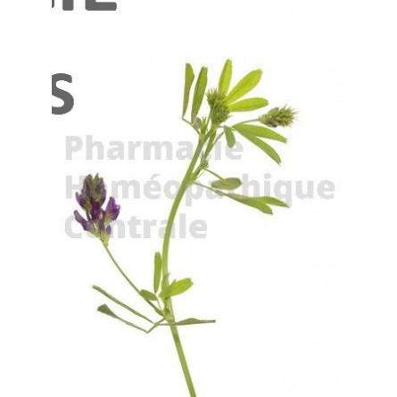 L'alfalfa est notamment recommandé chez la femme ménopausée pour atténuer les bouffées de chaleur