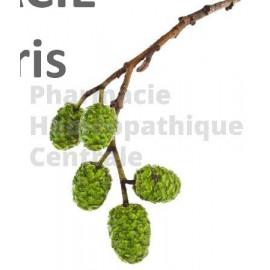 Aulne – Bourgeon macérât bio a des propriétés anti-inflammatoires, anti-infectieuses et hypocoagulantes