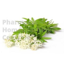 ASPERULE ODORANTE Asperula odorata - Plantes en vrac à infuser