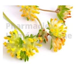 Astragale Extrait de Plantes Fraîches - EPS