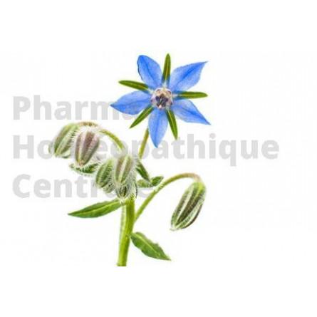 La BOURRACHE Borago officinalis a des propriétés sudorifiques, diurétiques, adoucissantes et dépuratives.