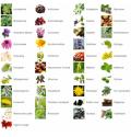 Les 56 Extraits Plantes Fraîches Standardisées de Phytoprevent