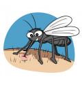 Piqûres d'insectes et huiles essentielles