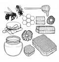 Tous les produits de la Ruche et leurs propriétés : le guide en Apithérapie pour guider vos achats