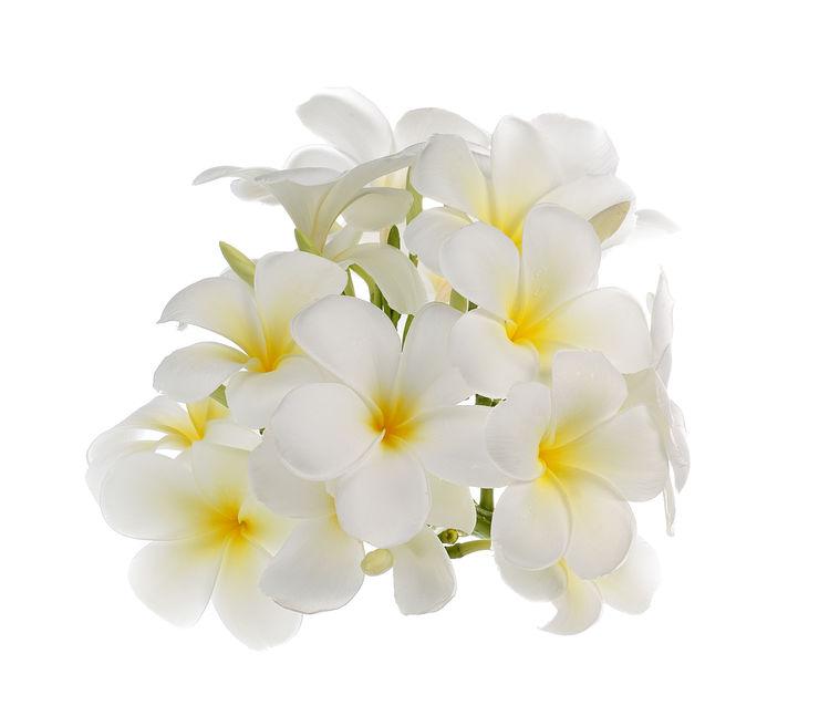 fleurs-bach-émotions-guide